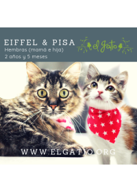 EIFFEL Y PISA