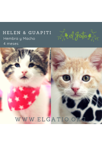 HELEN Y GUAPITI